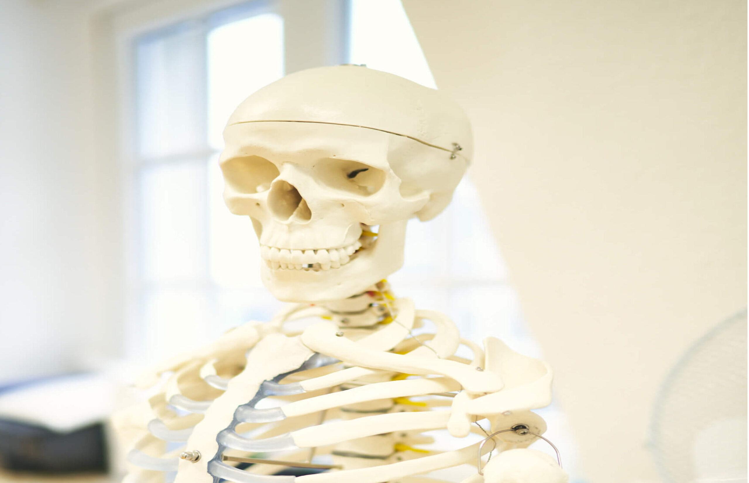 Diese Abbildung zeigt ein Skelett